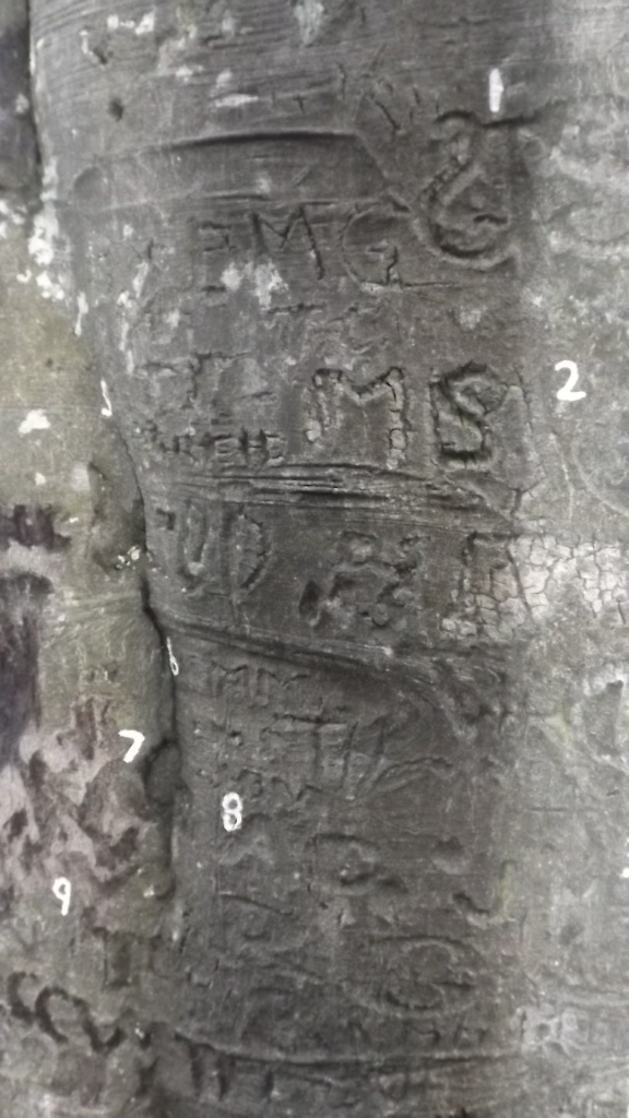 DSCF8158